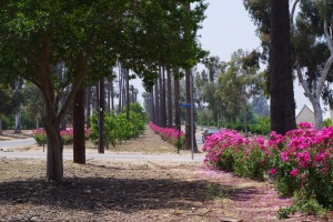 The line of palm trees, and blooming roses is loved by hikers, bikers, and commuters throughout the city.