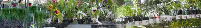 plantsalebanner